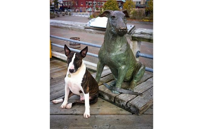 Pomnik słynnego bulteriera Patsy Ann (1929-1942).  Patsy Ann bezbłędnie wyczuwała zbliżanie się każdego statku do portu w Juneau (Alaska)