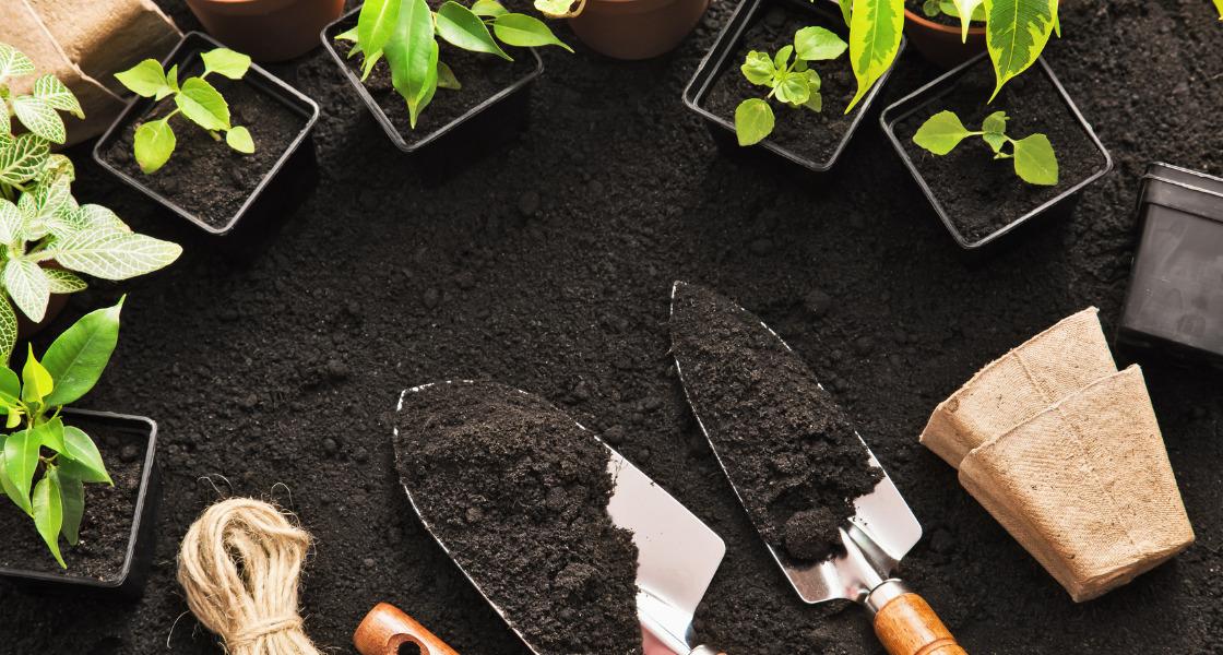 ogródek pasja